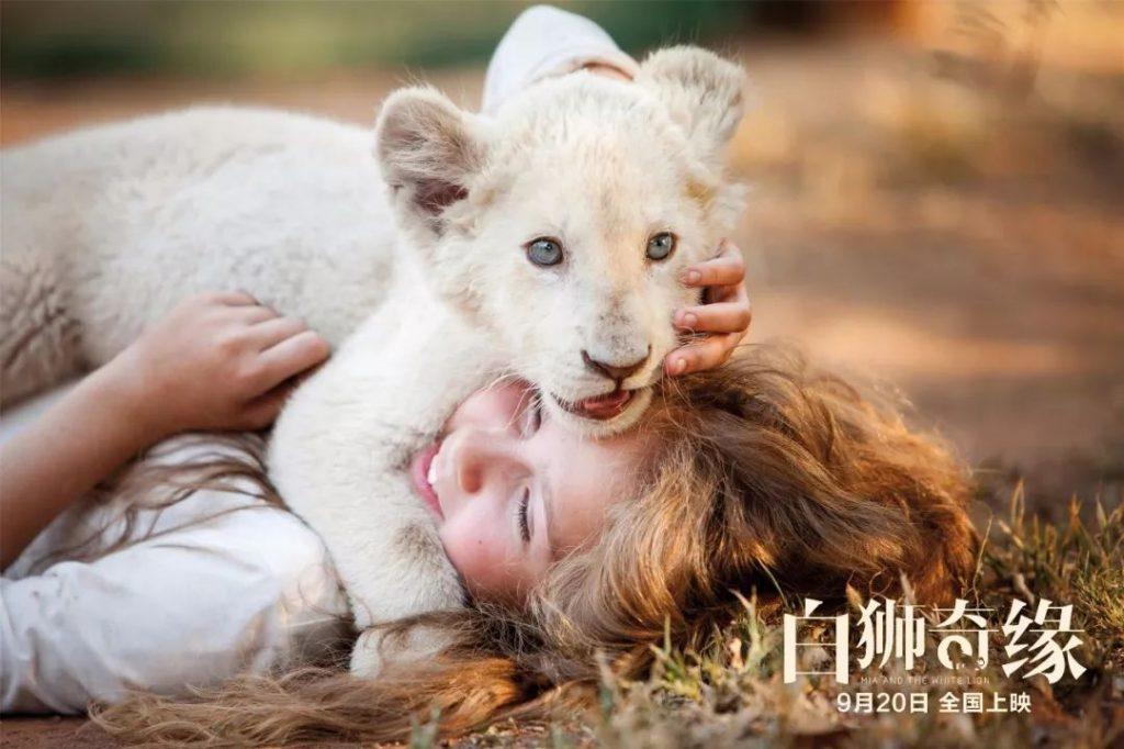 法国电影白狮奇缘定档9月20日,你会去看吗?
